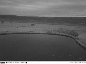 cheetah-3-300x225